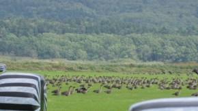 【お知らせ】秋の渡り鳥観察会