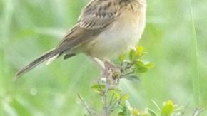 小鳥の幼鳥