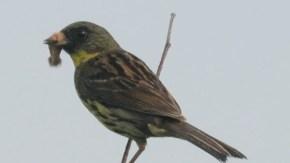 湿原の小鳥たち