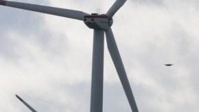 衝突死した「オジロワシ」山積み写真 風力発電とバードストライク