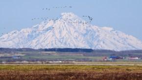 【案内】春の渡り鳥観察会