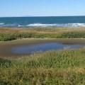 干上がったコウホネの沼