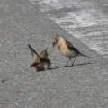路上の小鳥