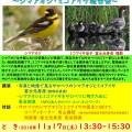 シマアオジ・ミコアイサ報告会(2018.11.17)