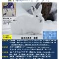 富士元寿彦氏と探すエゾユキウサギ【読者限定】