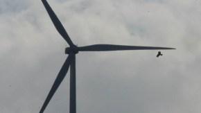 天北風車とトビ