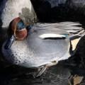三貫清水周辺の鳥類