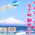 【案内】3/17(日)早春の海岸線で生き物観察ツアー開催!