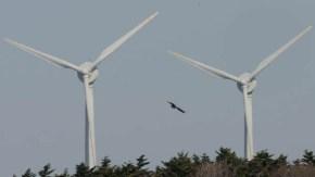 オトンルイ風車とオジロワシ