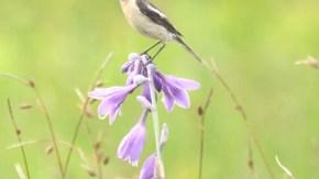 湿原を行き交う鳥