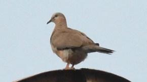 北京の鳥類