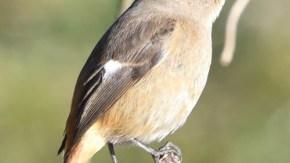 さいたまの鳥2