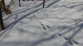 【お知らせ】 豊富温泉スノーシュー特設コースのご利用は3/8(日)までです