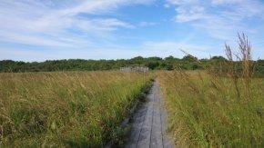 サロベツ湿原 最新開花情報 200914