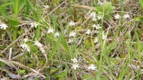 サロベツ湿原最新開花情報 + 木道のようす210531