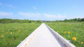 サロベツ湿原最新開花情報+木道のようす210624