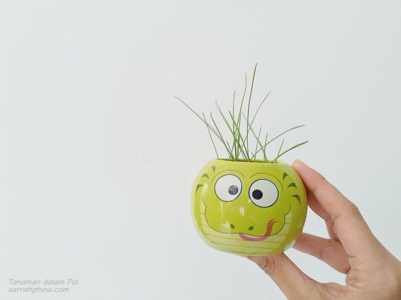 tanaman-pot-4