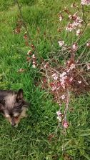 Puska vs Prunus