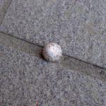こ、これは!?~ツバメの卵のカラ