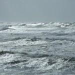 11月の嵐~笹川流れ