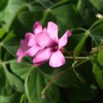 初冬に咲く花~笹川流れ
