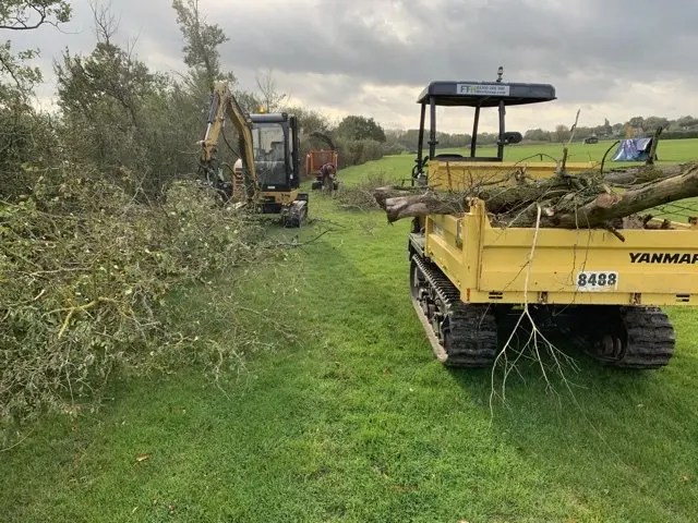 Excavator and tree shear