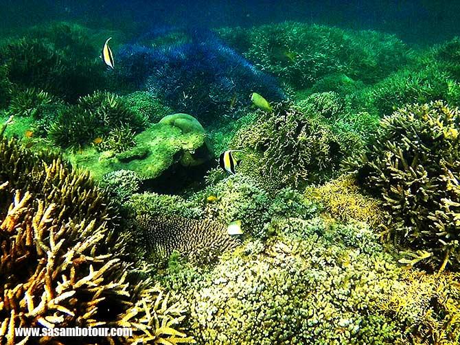 paket-snorkling-lombok