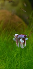 betta aquarium services