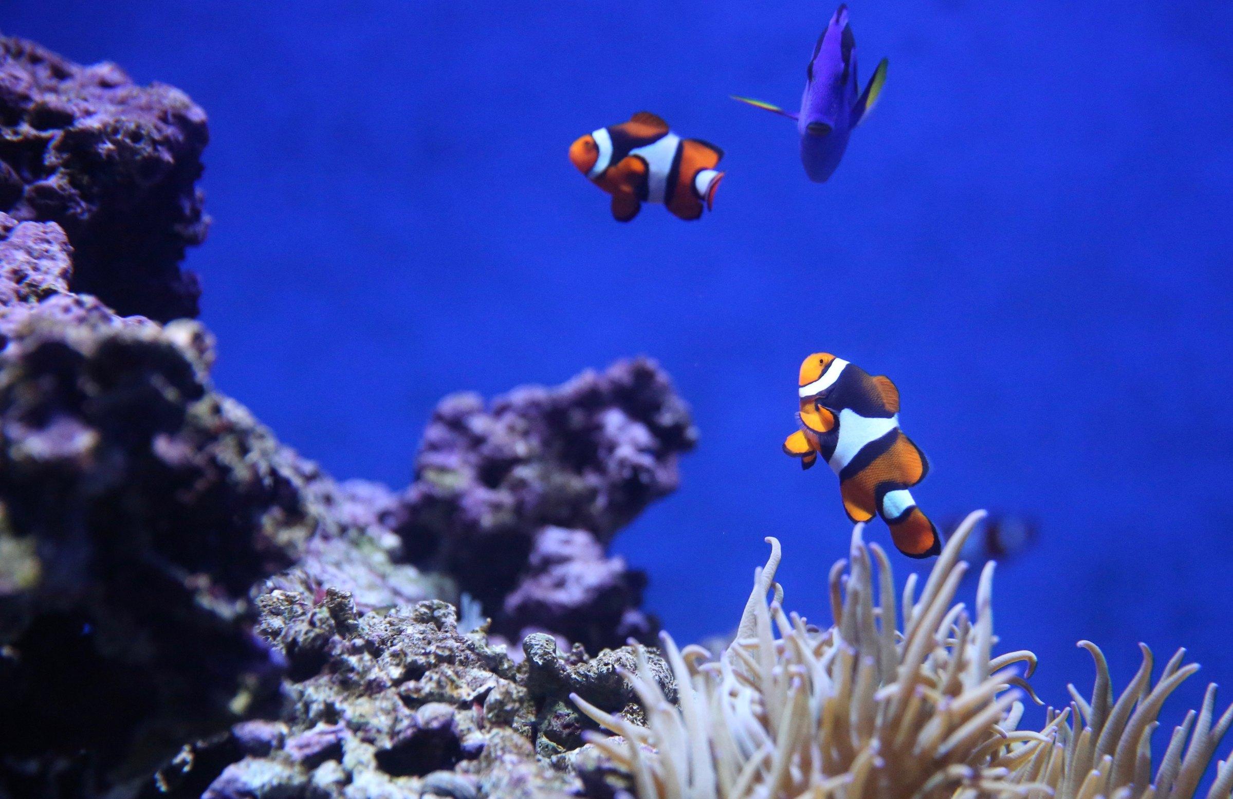 Aquarium cleaners