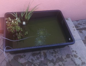 pond plants and fish