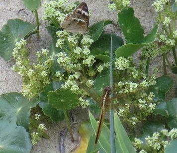 bugssandplants