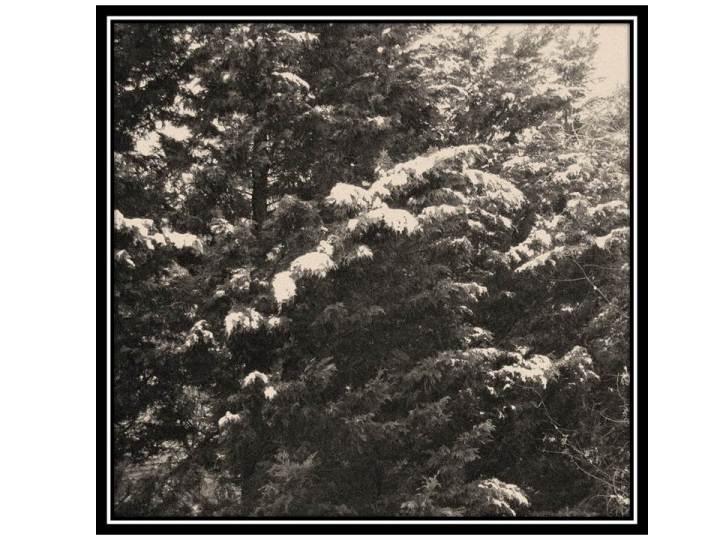 tree-snow