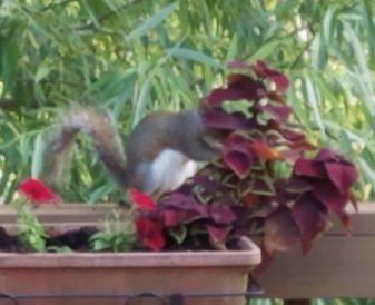 plant thief