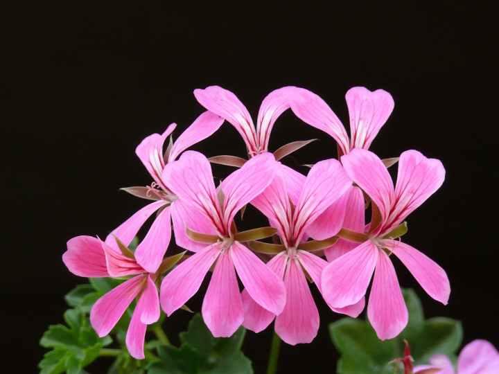 flower pink bloom floral