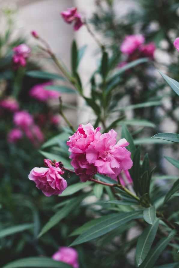 flowers summer shrub garden