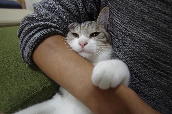 カフェ ニャンコプラス 猫2