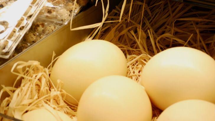 ダチョウの卵