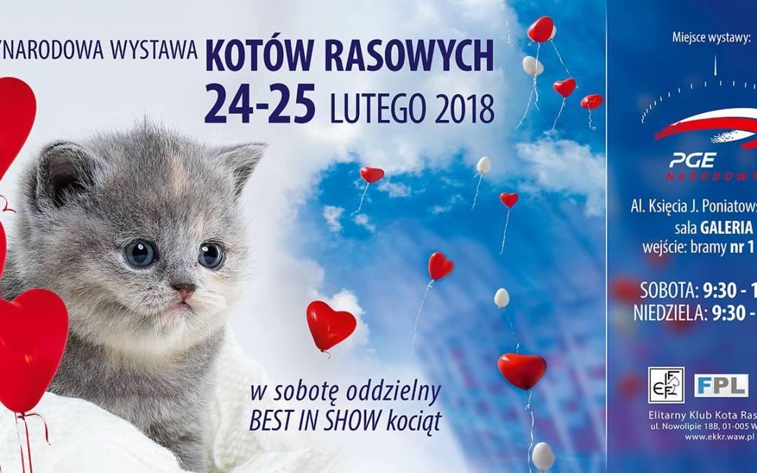 2018-02-25: Międzynarodowa Wystawa Kotów Rasowych
