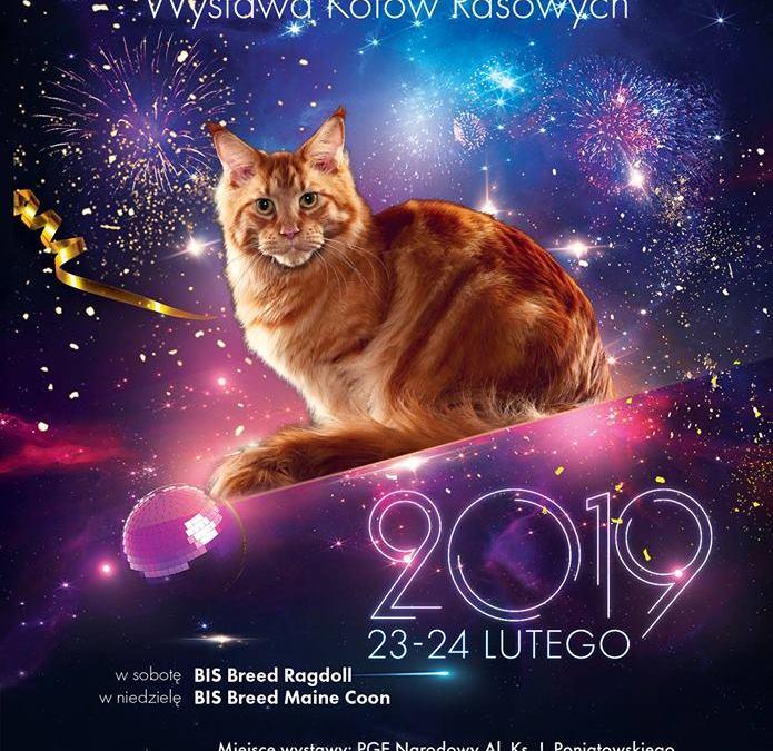 2019-02-24: Międzynarodowa Wystawa Kotów Rasowych