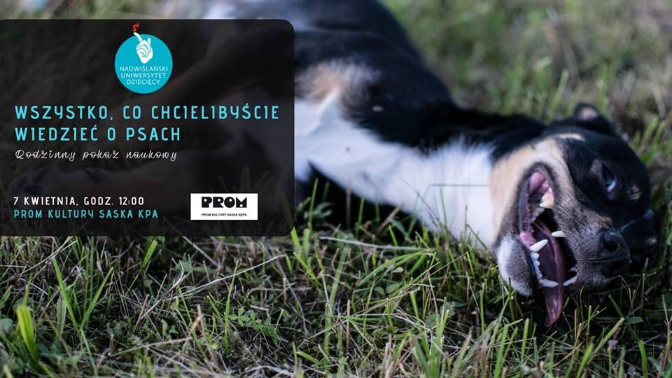 2019-04-07: Wszystko, co chcielibyście wiedzieć o psach – pokaz naukowy