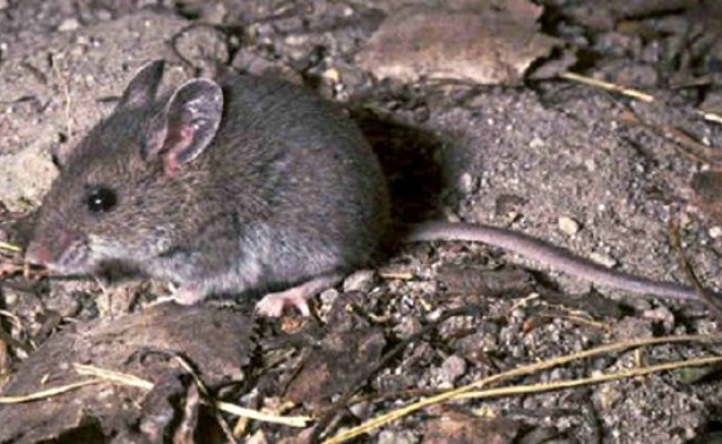 Sask Confirms Hantavirus Releated Death Ctv Saskatoon News