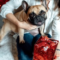 Holiday Gift Guide: Perfect Gifts for Dog Moms & Pet Lovers