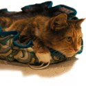 Shopify-Swirl-1-Nest-Bed