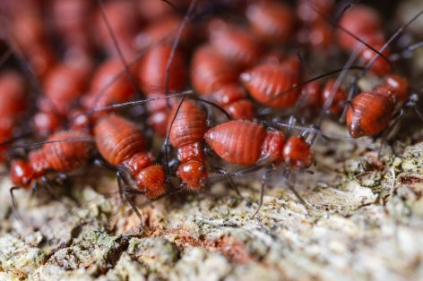 Colony of termites to show difference between ants and termites