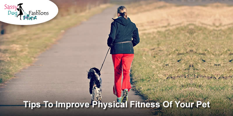 Tips To Improve Physical Fitness Of Your Pet Sassy Dog Fashions