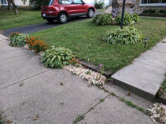 Marigolds and mulch
