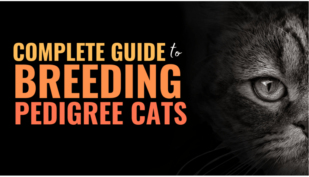 how to breed cats