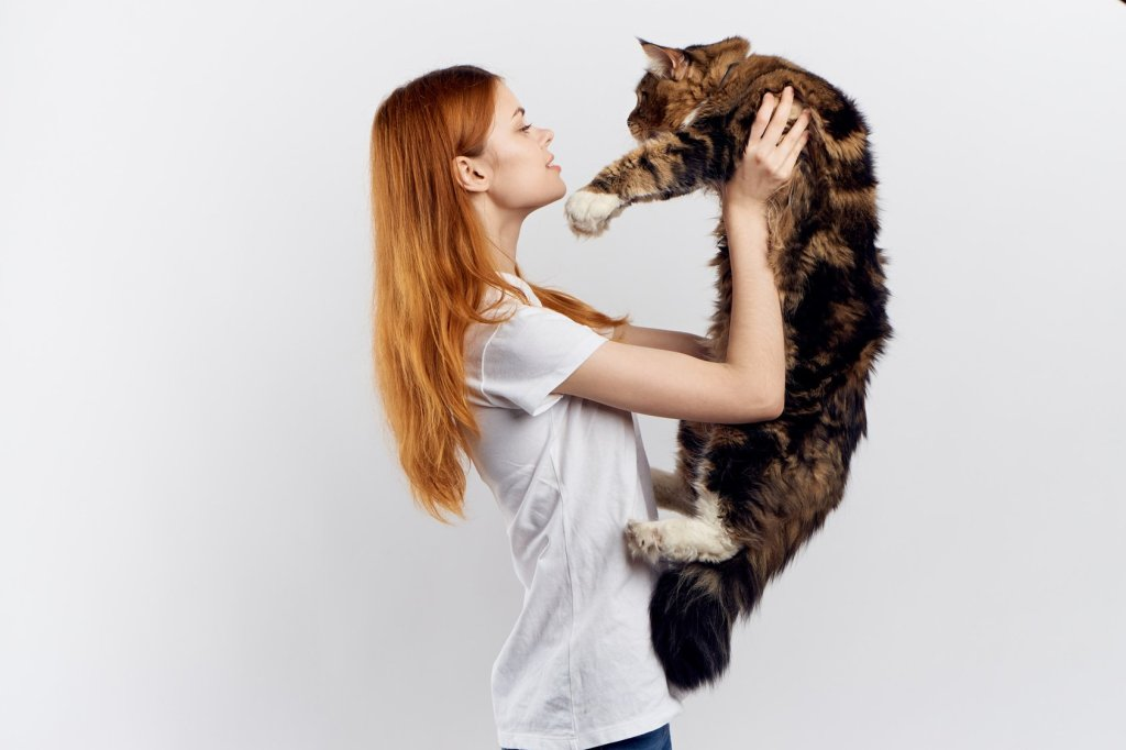 how big does a maine coon cat get