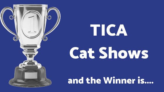 tica cat shows