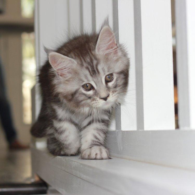 kitten learning to balance